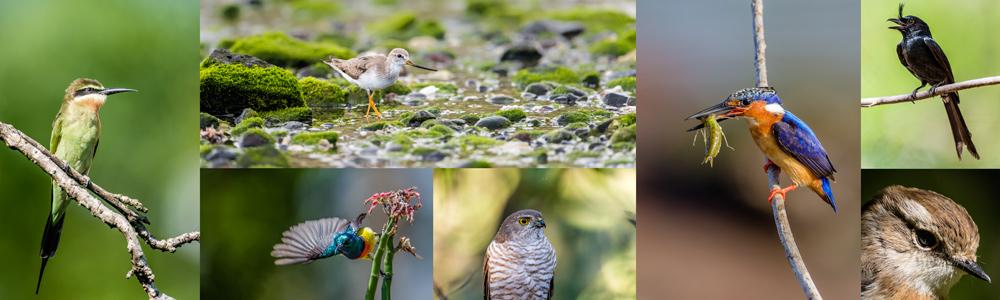 accueil ornitho.photos - galerie de photos ornithologiques.